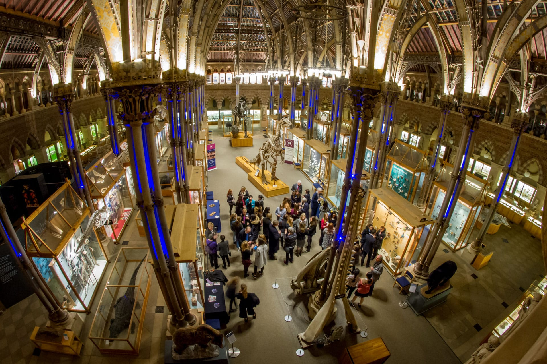 networking event in the oxford museum of natural history